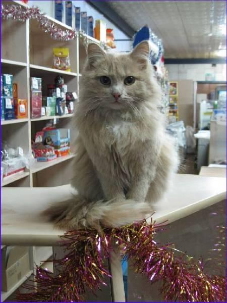 Сайт Кошачьих Знакомств